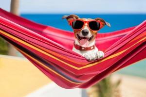Собака в солнечных очках отдыхает на гамаке