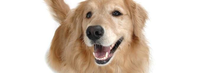 Счастливая собака улыбается
